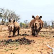 rhino pic 2